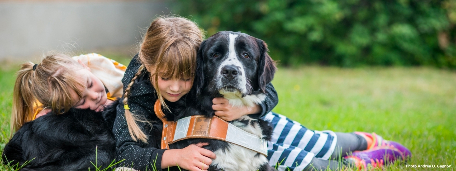 Two young girls hug a Labernois dog who has his Mira harness
