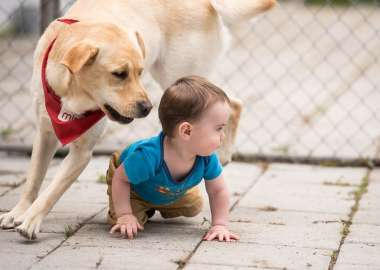 A Labrador dog with a Mira scarf plays with a baby on the ground