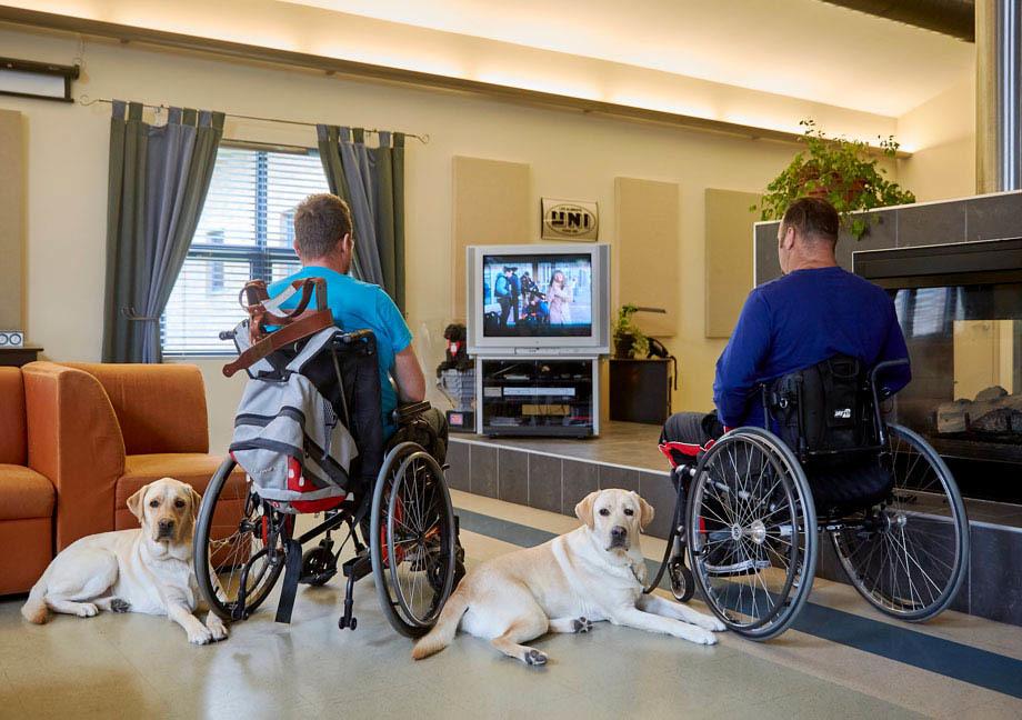 Deux chiens d'assistance allongés à côté de leurs maîtres en fauteuil roulant