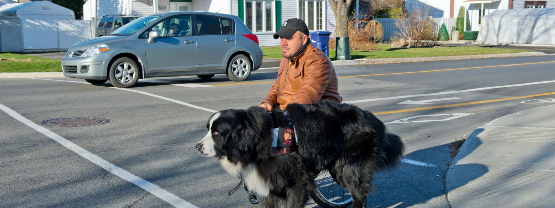 Programme chien assistance